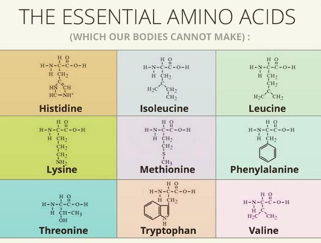 Perche'-assumere-aminoacidi-essenziali?